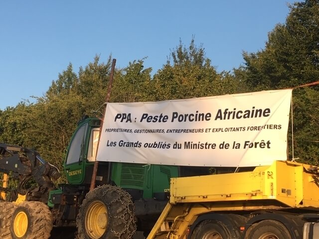 La gestion de la peste porcine africaine  tue le secteur forestier