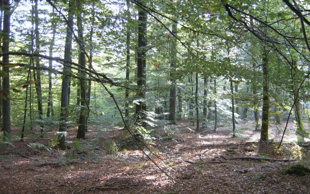 Certification forestière : lettre ouverte aux propriétaires et gestionnaires forestiers